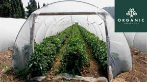 What Material Should I Use for My Greenhouse Covering