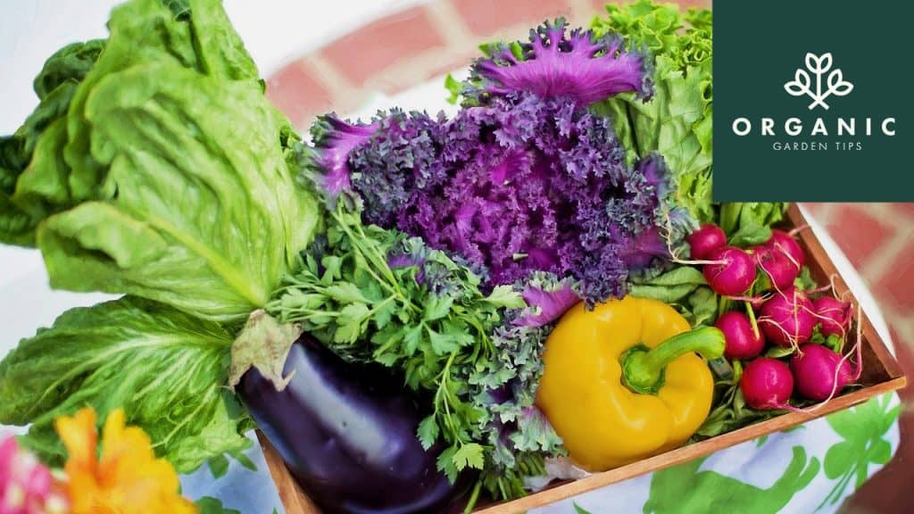 5 Cost-Effective Organic Gardening Tricks for a Rewarding Harvest