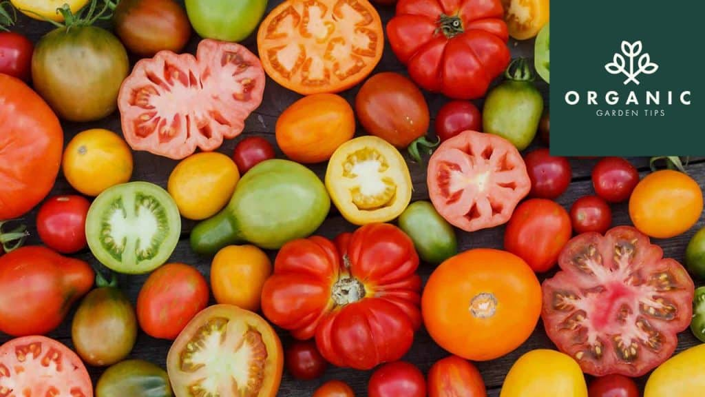 11 Bucket List Tomatoes You Gotta Grow Before You Go