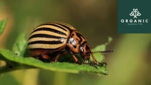 7 Non-Toxic Ways to Get Rid of Garden Pests