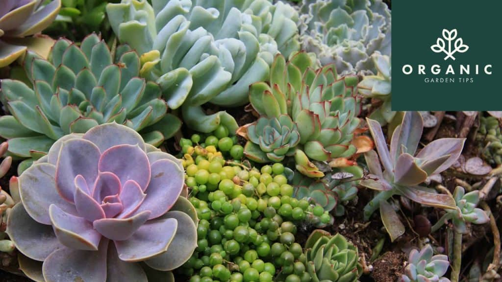 7 Sensational Succulents