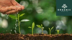 9 Health Benefits of Growing Plants