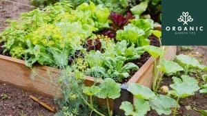 10 Smart and Budget-Friendly Ways to Garden