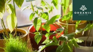 13 Edible Plants You Can Grow in Containers at Home