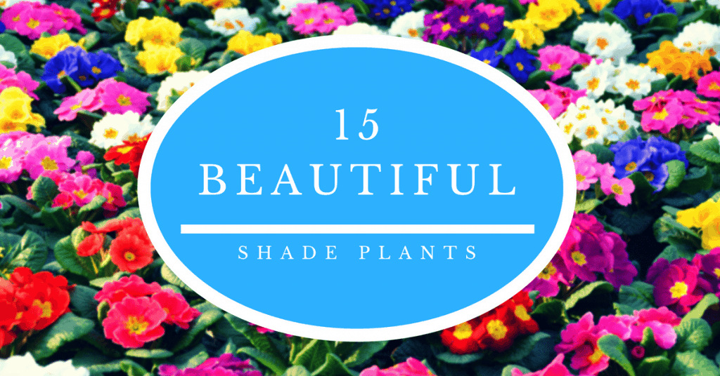 15 Beautiful Shade Plants for Your Garden