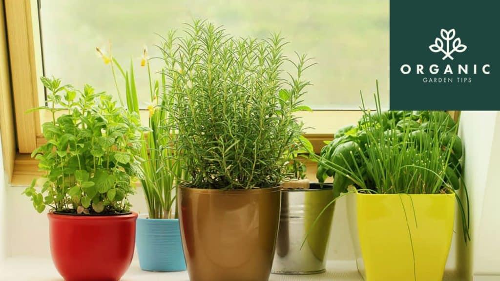 30 DIY Indoor Herb Garden Ideas