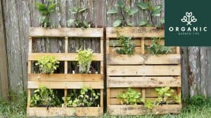 It's Time to Upcycle Your Garden