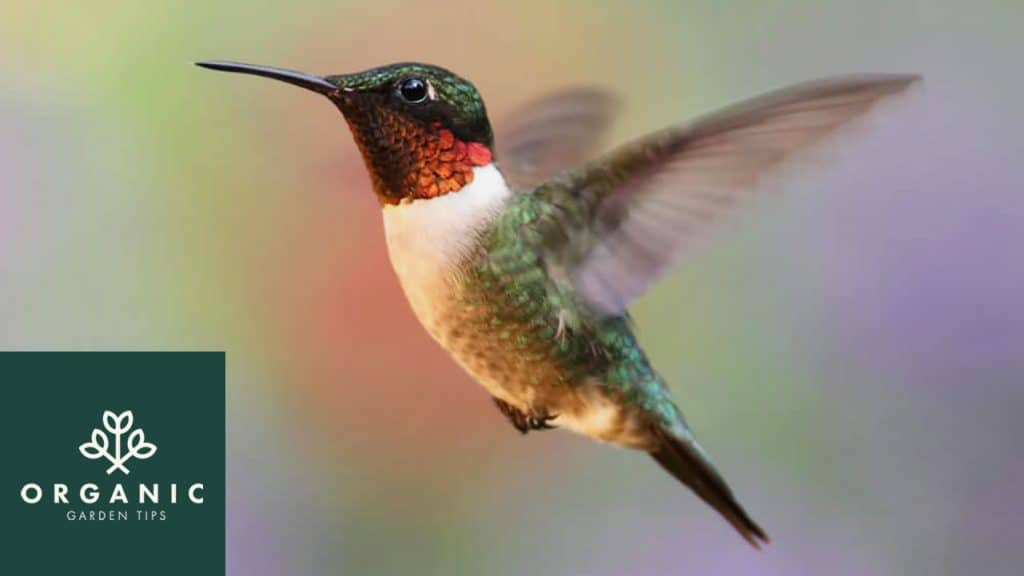 10 Ways to Attract Hummingbirds to Your Garden