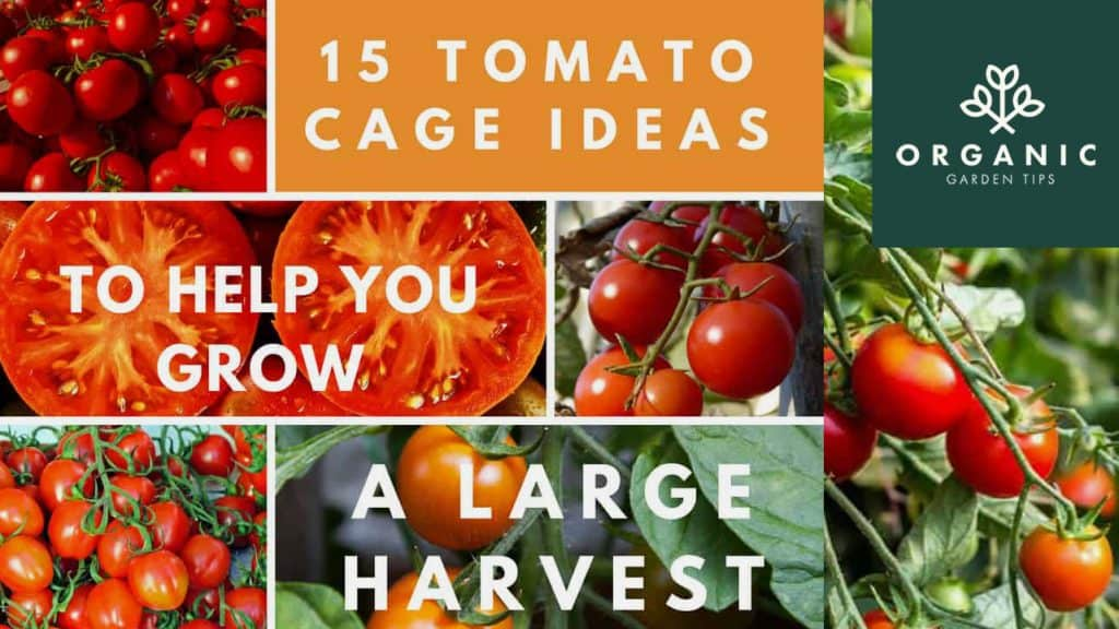 15 Tomato Cage Ideas to Help You Grow a Huge Harvest