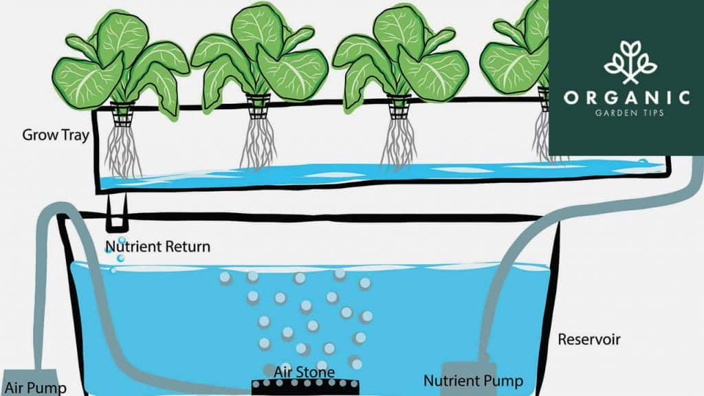 Best Aquaponic Grow Kits for Home Gardeners