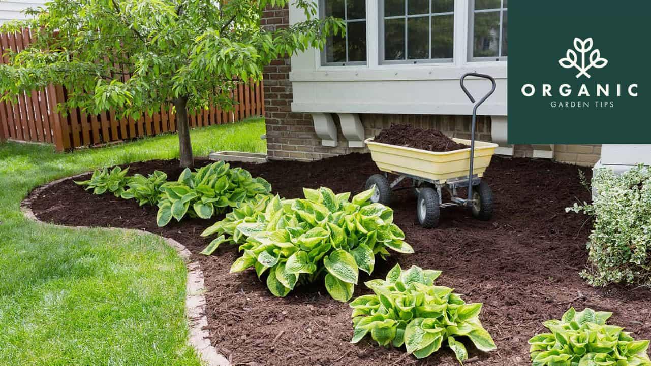 Best Garden Carts for Serious Gardeners