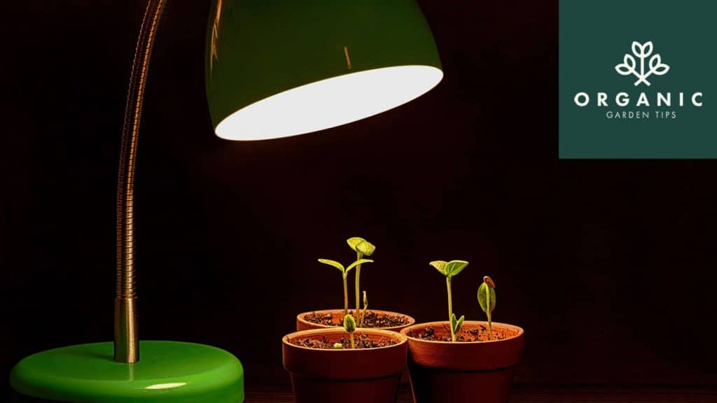 Best Grow Lights for Hydroponic & Aquaponic Gardening