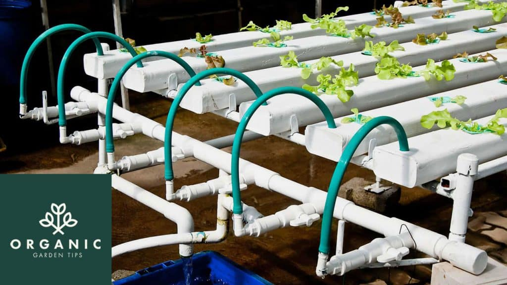Best Hydroponic Kits for Home Gardeners