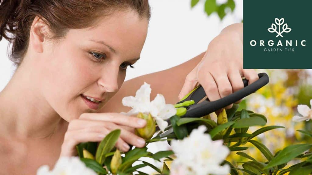 Best-Pruning-Gear-for-Backyard-Gardeners