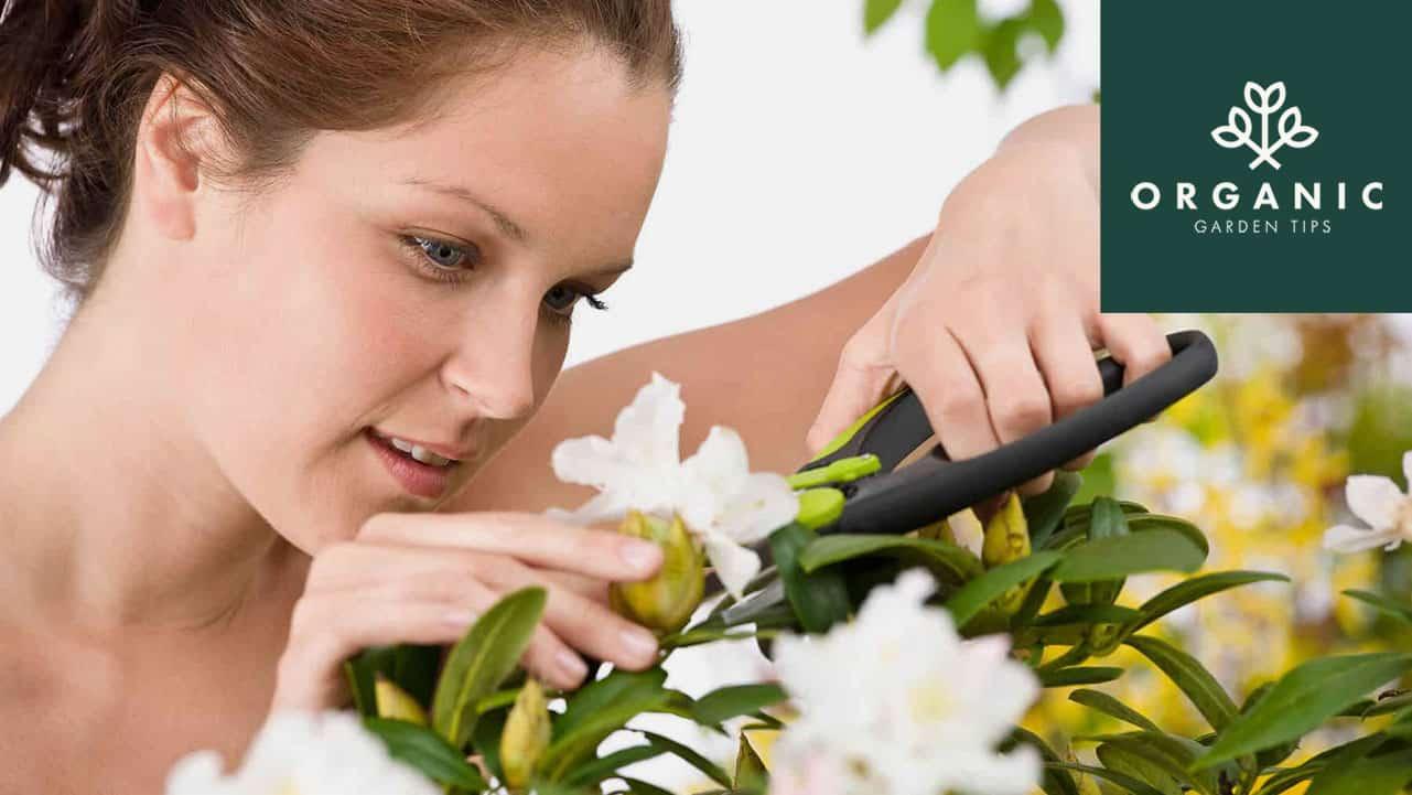 Best-Pruning-Gear-for-Backyard-Gardeners