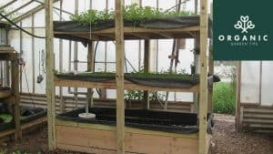 Denver Jail Using Aquaponics