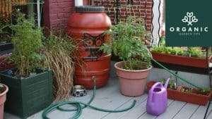 How You Can Start Benefiting From Rainwater Harvesting