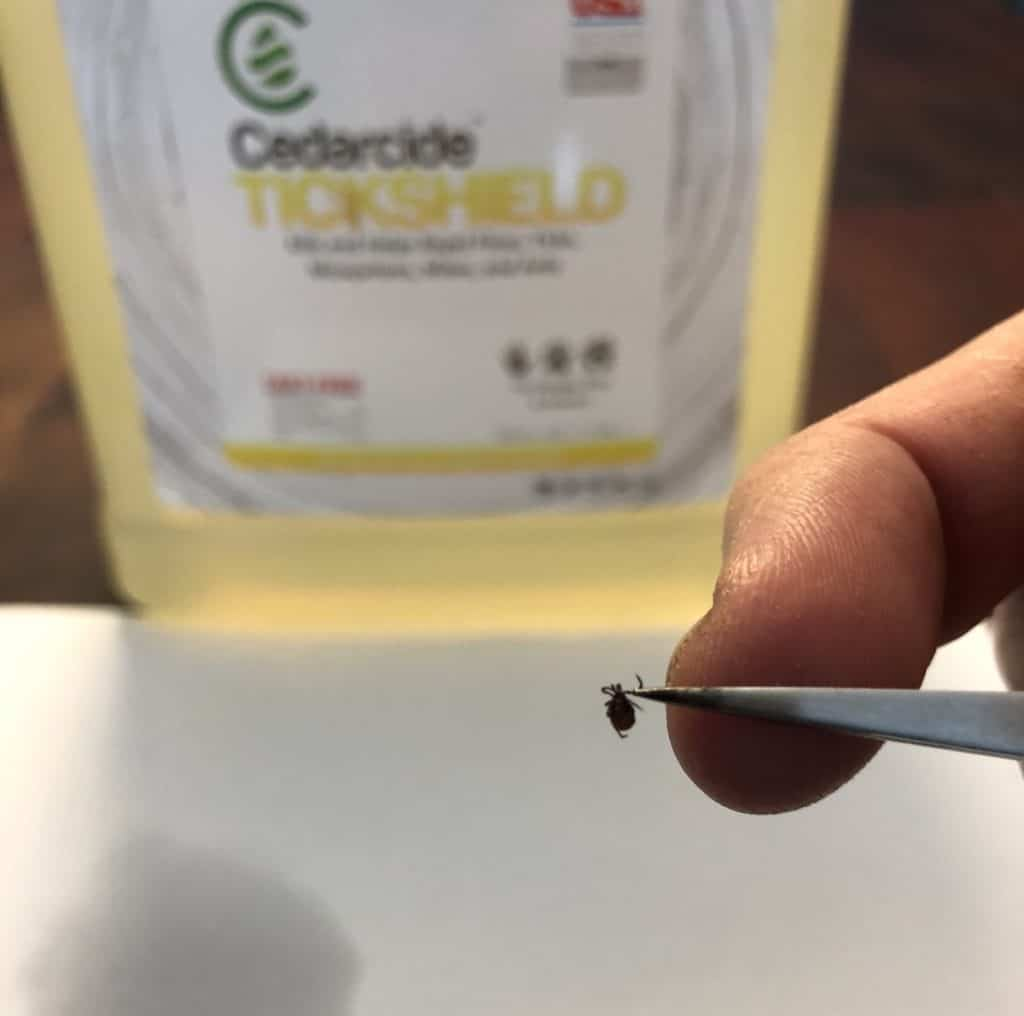 Cedar Oil for Ticks