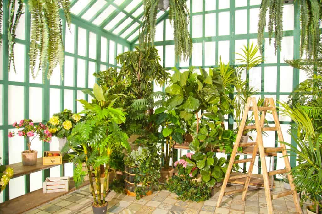What Can You Grow In A Greenhouse For Beginners