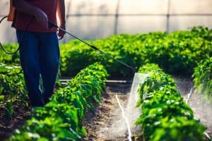 Pesticides in a Greenhouse