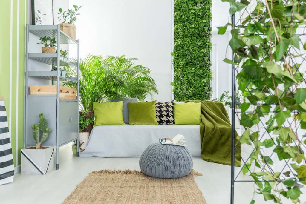 How to Start Indoor Gardening