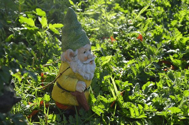 A gnome in a green garden