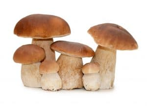 Can You Grow Edible Mushrooms Without a Kit?