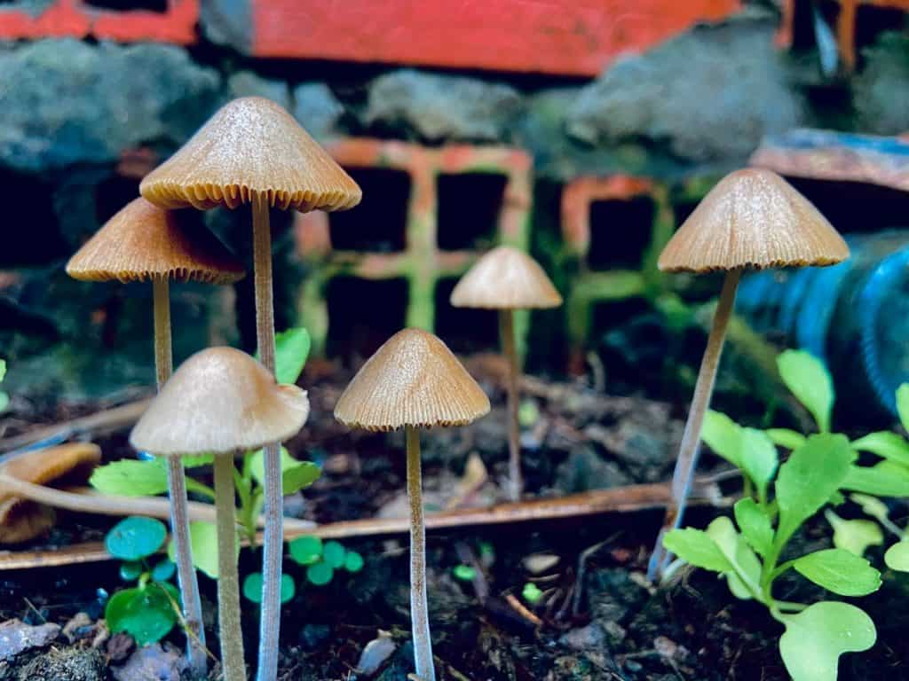 Mushrooms in a garden