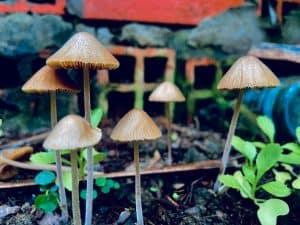 Mushrooms in a garden