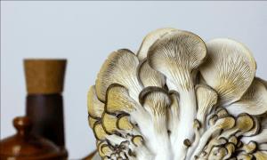White Oyster Mushrooms